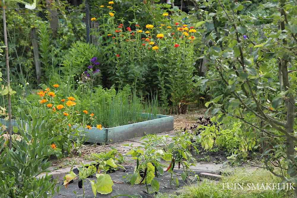 Moestuin tuin smakelijk for Tuinontwerp eetbare tuin